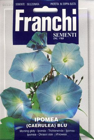 美しい緑のカーテン FRANCHI社-ヘブンリーブルー  イタリアの朝顔333/2