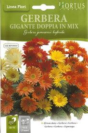 【イタリア花の種】Hortus社 ガーベラ BGFGRB001