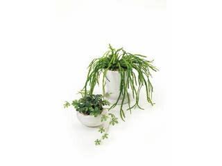GREENPARK ★★★シュガーバイン&リプサリス2個セット(造花) PRSY−0101