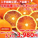 【送料無料】【訳あり】【タロッコ】なかなか手に入らない貴重な品種!愛媛県宇和島産ブラッドオレンジ たっぷり5kg【…