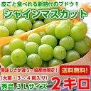 送料無料 シャインマスカット ぶどう皮ごと食べれるブドウ♪山梨産 大房シャインマスカット秀品3Lサイズ 2kg(3〜4房…