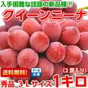 プロの間で大注目の赤色ブドウ新品種濃厚な甘味と豊かな香りは絶品♪長野産クイーンニーナ 秀品3Lサイズ 1Kg【北海道…