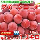 プロの間で大注目の赤色ブドウ新品種濃厚な甘味と豊かな香りは絶品♪長野産クイーンニーナ 秀品4Lサイズ 1.2Kg【北海…
