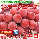 プロの間で大注目の赤色ブドウ新品種濃厚な甘味と豊かな香りは絶品♪長野産クイーンニーナ 秀品3Lサイズ以上2Kg【北海…