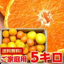 個性豊かな果汁たっぷり♪5種類以上の柑橘が楽しめる店長のきまぐれ春の柑橘福袋 たっぷり5kg【北海道800円・沖縄・一…