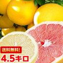 お砂糖は必要ありません!日本向けグレープフルーツの最高峰!フロリダ産完熟グレープフルーツ4.5kg北海道、沖縄・一…