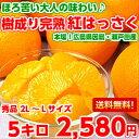 【送料無料】【はっさく】ほろ苦い大人の味わいと濃厚果汁は絶品♪樹成り完熟紅はっさく5kg【北海道・沖縄・一部離島…