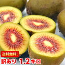 全国でも数箇所しか栽培されていない常識を覆すほど甘〜い♪キウイフルーツ山梨産 レインボーレッド1.2kg【北海道800…