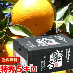 選び抜かれたひとしずく!木成り清見タンゴール「蜜る」特秀5kg北海道、沖縄・一部離島は発送不可