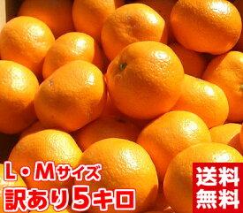 北海道、沖縄・一部離島は発送不可見た目は良くありませんが味は抜群です♪訳あり三ヶ日・浜名湖みかんLMサイズ5Kg