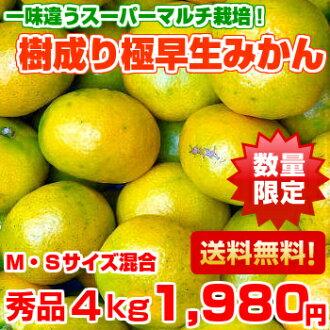 ♪ supermarket multi-pole premature delivery mandarin orange 3 kg +1 kg increase in quantity that fresh fragrance and sweetness can enjoy