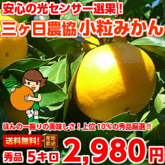 H. products does not pass only the top 10% carefully selected! 3 months, Orange (small), S size with 5 Kg