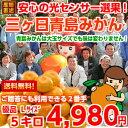 【送料無料】【みかん】ご贈答にもご利用できる2番手等級です!濃厚な果汁は早生種以上♪三ヶ日みかん優品Lサイズ5kg…