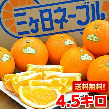 木熟のため、表皮にキズがあります!三ヶ日越冬完熟ネーブルオレンジ4.5kg【北海道・沖縄・一部離島は別途800円】