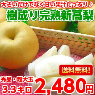 It's exactly haha super size! And yet the large as well as the sweet juice plenty of carefully more than 13 degrees Brix! Tree become ripe ball niitaka 3.3 kg