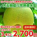 【送料無料】【光センサー選果】【糖度保障】ハイテク光センサー選果で厳選!ロイヤルの称号を与えられた長野産樹成り…