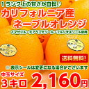 センサー プレミアム カリフォルニア ネーブル オレンジ