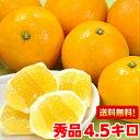 白い綿の部分が食べれる不思議柑橘!夏の訪れを告げる風物詩♪伊豆特産ニューサマーオレンジ4.5kg【北海道800円・沖縄…