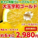 大玉サイズでお買い得!!【送料無料】やっぱり国産は味と香りが違う♪和製グレープフルーツと呼ばれる柑橘愛媛産大玉…
