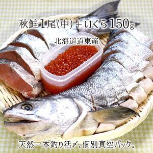 一本釣り活〆 天然秋鮭(中) 1尾 切り身 約2.5kg、いくら200g 個別真空パック 熟成鮭 北海道道東産 送料無料