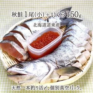 一本釣り活〆 天然秋鮭(小) 1尾 切り身 約2kg、いくら200g 個別真空パック 熟成鮭 北海道道東産 送料無料