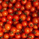 【イノチオ】野菜で元気!ミニトマト 1.8kg