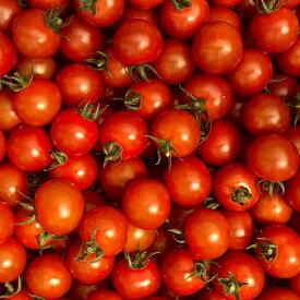 【イノチオ】野菜で元気!ミニトマト_1.8kg