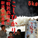 スーパーコシヒカリ5kg【高級米】5kg 1等米「29年産 新米」
