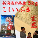 新潟県 妙高産こしいぶき5kg【玄米】 【29年産 一等米】