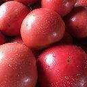 完熟トマト(夏季限定販売)20個〜24個