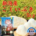 無洗米 新潟産 こしいぶき5kg「29年産 無洗米」