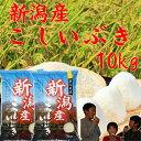 新潟産こしいぶき10kg(5kg×2個)「29年産 一等米」