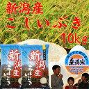 無洗米 新潟県産こしいぶき10kg(5kg×2個)「29年産 無洗米」
