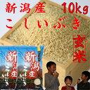 新潟産こしいぶき10kg【玄米】5kg×2個【29年産 1等米】