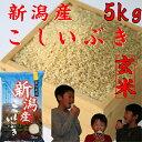 新潟産こしいぶき5kg【玄米】 【29年産 一等米】