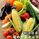 旬の高原野菜セットB