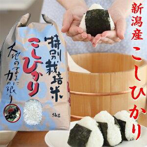 新潟米 特A スーパーコシヒカリ 5kg 【高級米】 お米5kg 令和2年