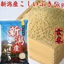 『玄米』 新米 5kg 令和元年 令和お米 米 こしいぶき 5キロ【新潟県産 玄米】 【新潟産 こしいぶき】[お取り寄せ/おいしいお米/美味し…