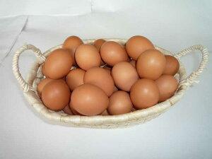 【九州産特選地卵】貴黄卵40個セット(Mサイズ)【卵の王様・貴黄卵】