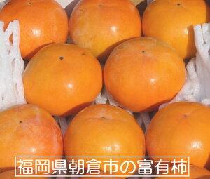 福岡県朝倉市柿 冷蔵柿 Lサイズ 約9個【富有柿】