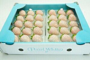 【送料無料】佐賀県久保田町の高級ブランド苺 「パールホワイト」 2パック イチゴ 白いちご 苺