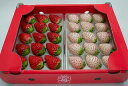 【送料無料】白いちご「パールホワイト」&赤いちご「さがほのか」食べくらべセット イチゴ 苺 ギフト 産地直送 佐賀…