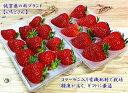 【送料無料】佐賀県白石町の新ブランド苺「いちごさん」 2パック イチゴ 苺 かわさきいちご ギフト 贈答用