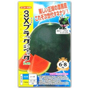 黒皮スイカ 種子 3Xブラックジャック 8粒 タネナシ西瓜