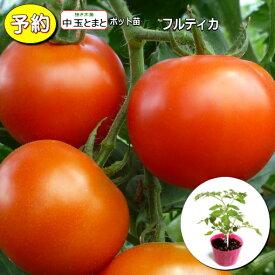 【予約】 接ぎ木 中玉トマト フルティカ 20ポットセット 9cmpot苗