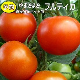 【予約】 実生 中玉トマト フルティカ 20ポットセット 9cmpot苗