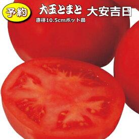 【予約】 実生 大玉トマト 大安吉日 20ポットセット 10.5cmpot苗
