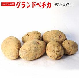 じゃがいも グランドペチカ (デストロイヤー) 種芋 5kg ジャガイモ 【ラッキーシール対応】