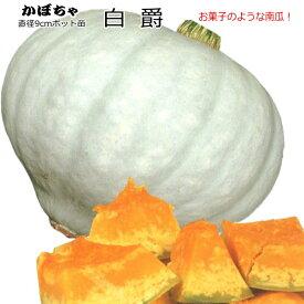 かぼちゃ 白爵 はくしゃく 9cmポット苗 カボチャ