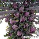 非結球芽キャベツ苗・プチベール ルージュ(10,5cmポット)